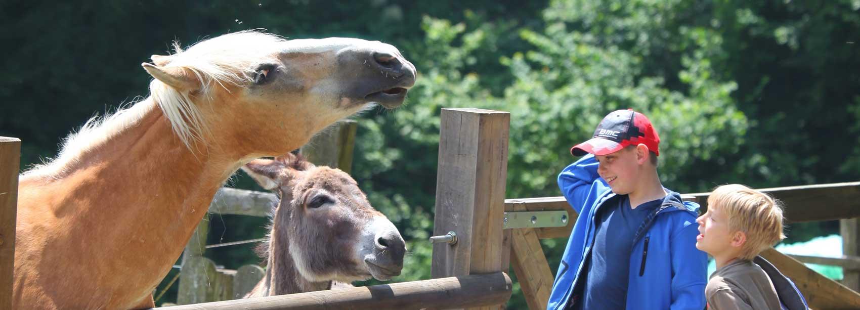 Pferd und Esel auf dem Wannenhof